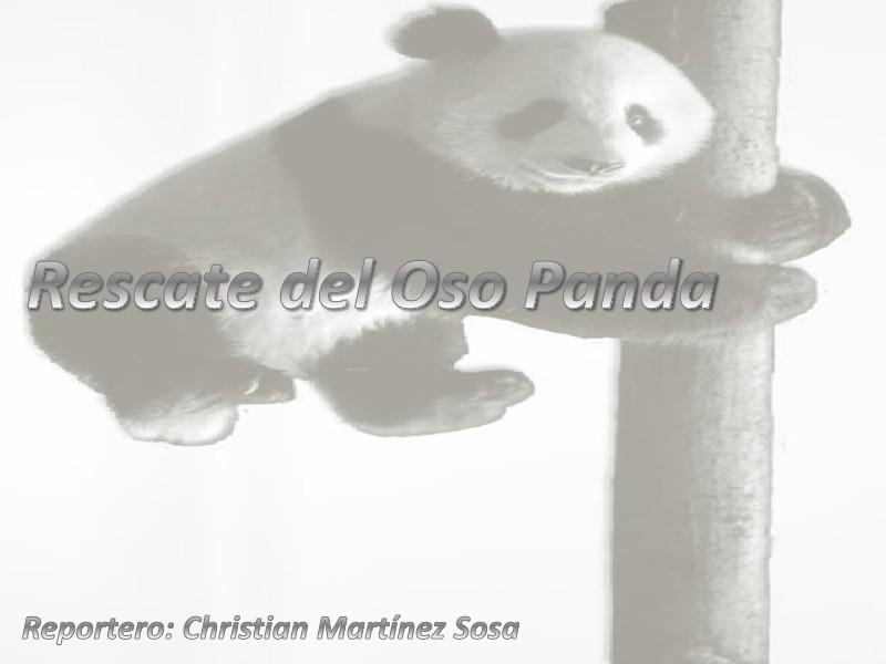 Rescate del Oso Panda Rescate del Oso Panda