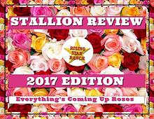 2017 Stallion Review