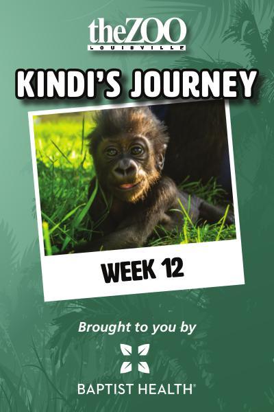 Kindi's Journey Kindi's Journey: Week 12