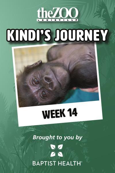 Kindi's Journey: Week 14