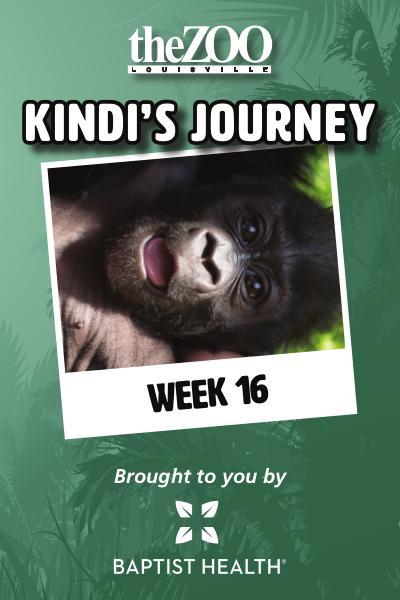 Kindi's Journey: Week 16