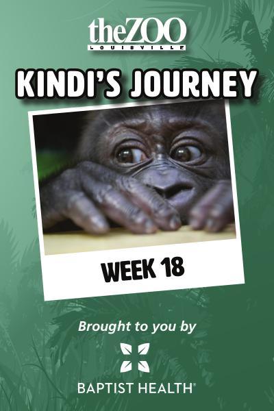 Kindi's Journey: Week 18