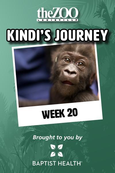 Kindi's Journey: Week 20