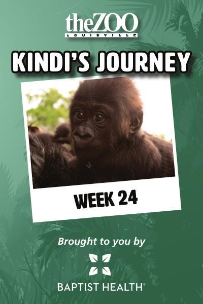 Kindi's Journey: Week 24