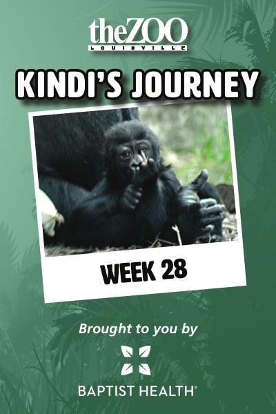 Kindi's Journey Kindi's Journey: Week 28