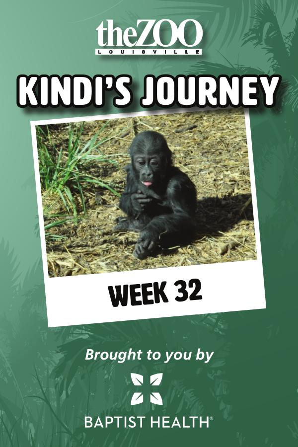 Kindi's Journey: Week 32