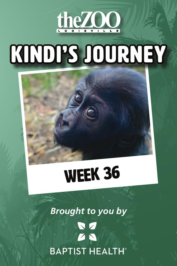 Kindi's Journey Kindi's Journey: Week 36