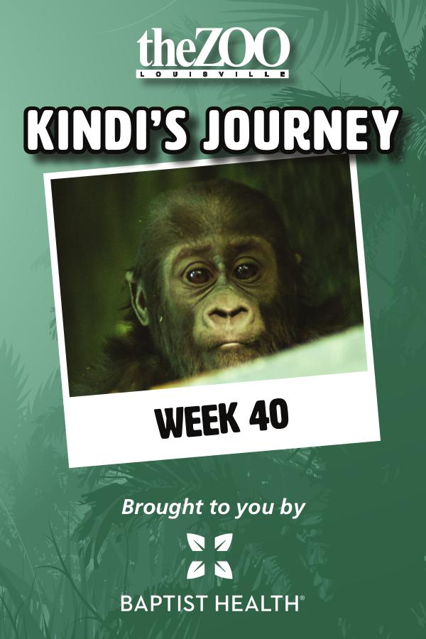 Kindi's Journey Kindi's Journey: Week 40