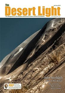 The Desert Light