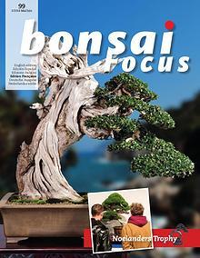 BONSAI FOCUS - Français