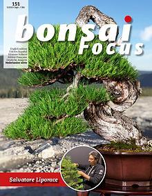 BONSAI FOCUS - Nederlands