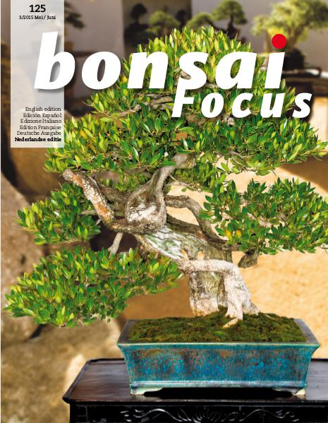 BONSAI FOCUS - Nederlands 2015-3