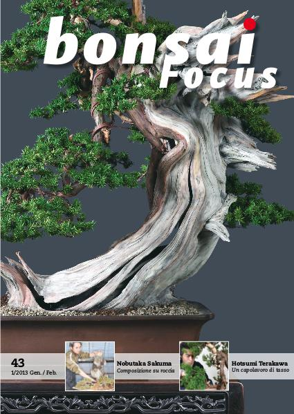 BONSAI FOCUS - Italiano 2013-1