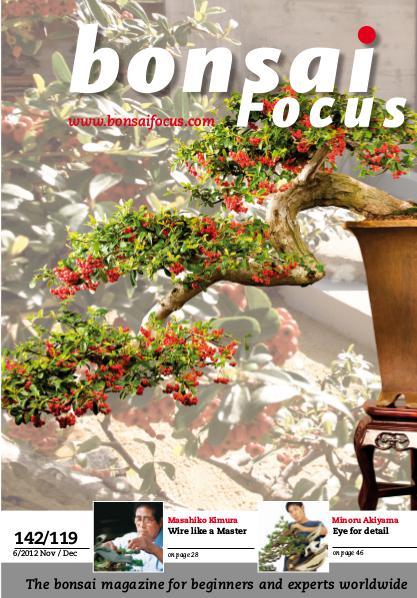 BONSAI FOCUS - English 2012-6