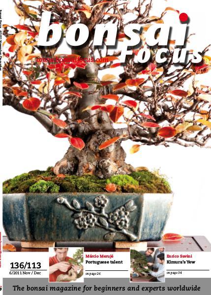 BONSAI FOCUS - English 2011-6