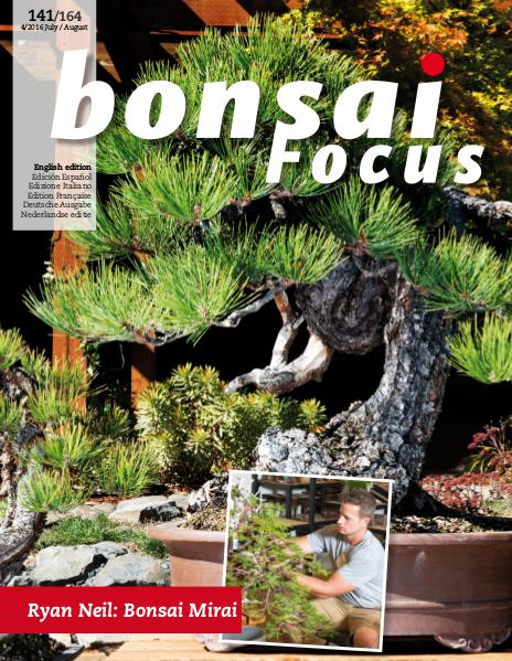 BONSAI FOCUS - English 2016-4