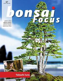 BONSAI FOCUS - Italiano