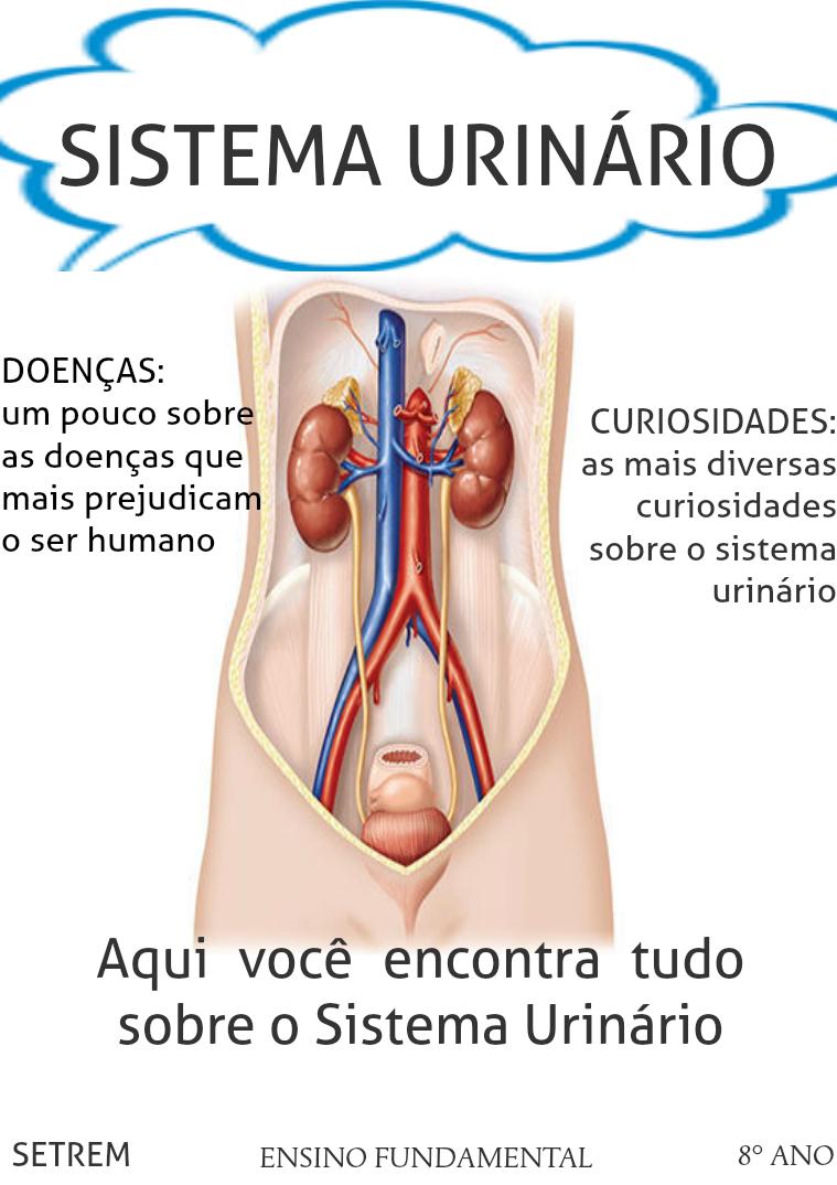 Sistema Urinário Sistema Urinário | Quiosco Joomag