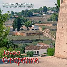 Javea Grapevine