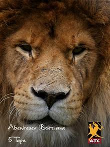 5 Tage Botswana Abenteuer