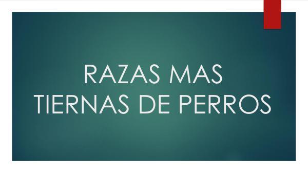 catalogo RAZAS MAS TIERNAS DE PERROS