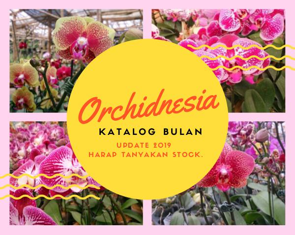 orchidnesia Katalog Orchidnesia 2019