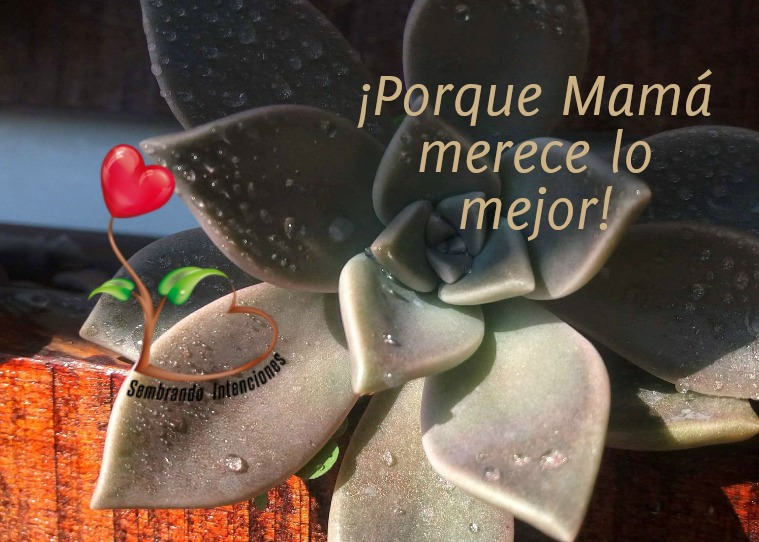 Sembrando Intenciones Catálogo Mayo 2019 Catálogo Mayo 2019(clone)