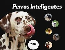 Mascotas Más Inteligentes Isabella