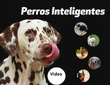 Revista Perros