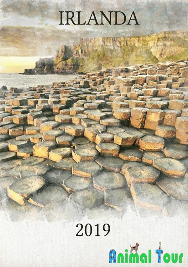 Catálogo Irlanda Catalogo irlanda terminado
