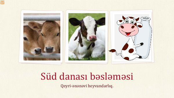 Şəkər Yem Fabriki Süd danası bəsləməsi