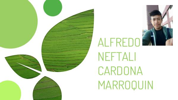alfredo neftali cardona marroquin alfredo cardona
