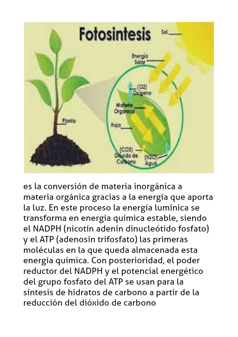La fotosintesis La fotosintesis