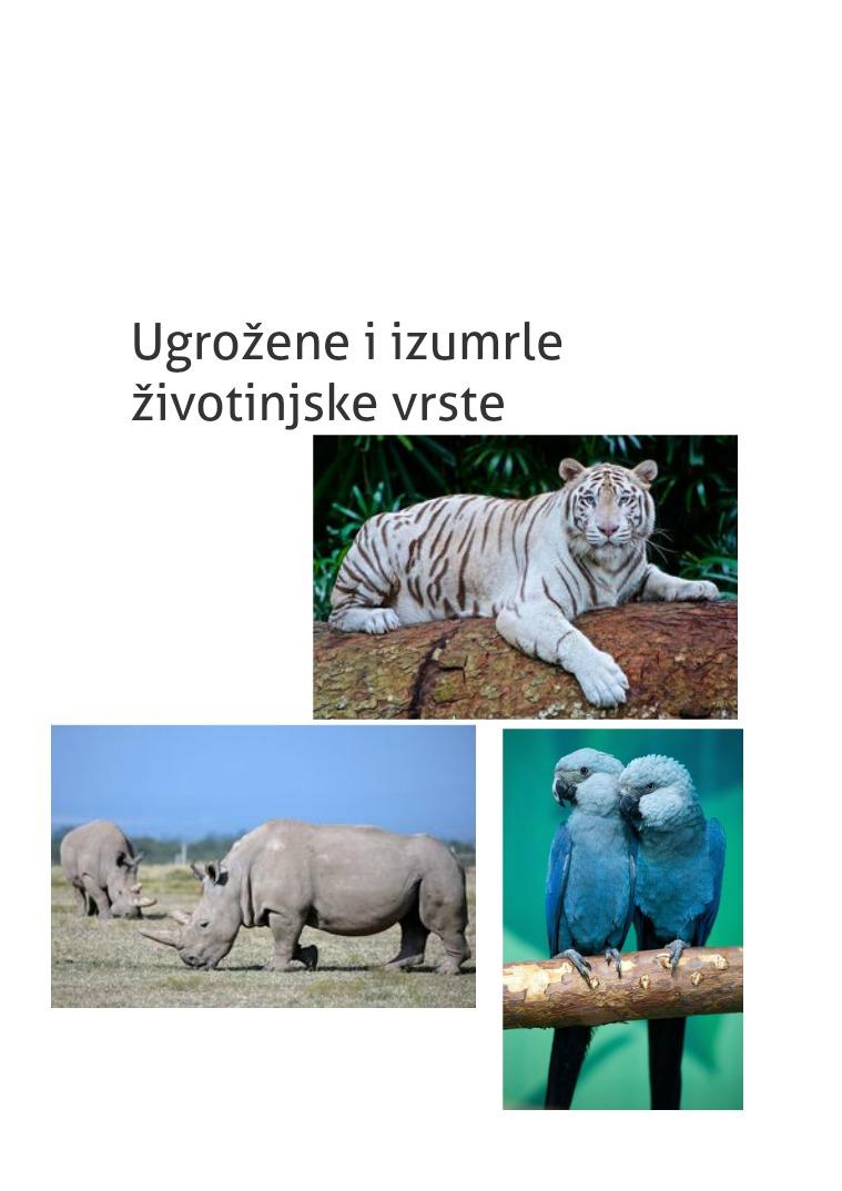 My first Publication Životinje